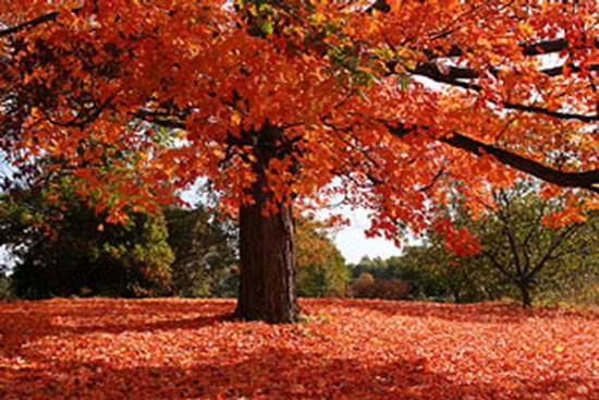 가을에 듣기 좋은 뉴에이지 모음곡